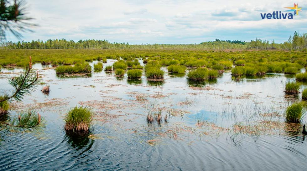 Природа Белоруссии: болота