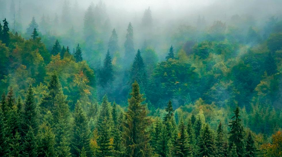 Леса в Белоруссии